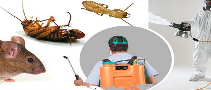 Pest Control Kensington
